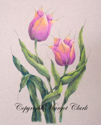 Tulips Colored Pencil E-Packet 246
